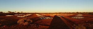 Evening panorama view of the MWA's East Hex, after deployment. Credit: Kimberly Steele