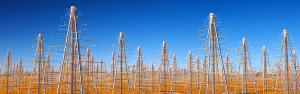 Artist's impression of the low frequency portion of the Square Kilometre Array (SKA-low) which will be constructed in Australia. In the latter part of this decade, 250,000 of these person-height antennas will be built in Western Australia and observe the Universe at radio wavelengths. Image Credit: Swinburne Astronomy Productions/ICRAR/U. Cambridge/ASTRON.