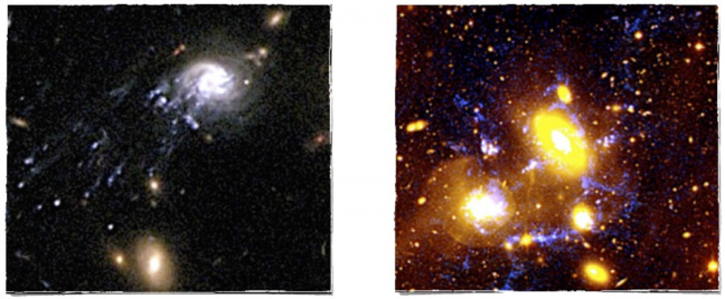 Galaxies in transformation discovered by the ICRAR/UWA group. Left: The comet (or jelly-fish) galaxy, an extraordinary object infalling into the centre of a cluster. The tail departing from the galaxy is made of clusters of new stars formed within the gas stripped from the galaxy (Cortese et al. 2007). Right: The compact group of galaxies showing the highest star formation rate density ever observed in the local Universe. The features highlighted in blue represent streams of ionised gas that extends for almost hundred thousands light-years outside the galaxies (Cortese et al. 2006).