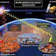 Probing cosmic explosions and unveiling extreme astrophysics using rapid-response radio telescopes