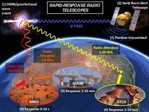 Flow diagram depicting the rapid-response observing system required for detecting prompt radio emission from SGRBs. Following a SGRB (1), Swift will detect the event (2) and then transmit its position down to Earth (3). This positional information will then be received by MWA and ATCA (with future plans for ASKAP), resulting in radio observations of the event with response times within minutes of the burst's detection (4).