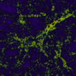 Large volume simulations of the large scale structure and galaxy formation