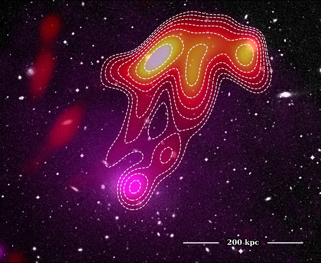 A composite image of the USS Jellyfish in Abell 2877 showing the optical Digitised Sky Survey (background) with XMM X-ray data (magenta overlay) and MWA 118 MHz radio data (red-yellow overlay).